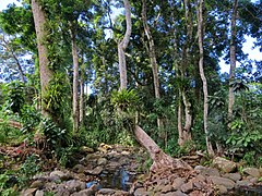 Ripisylve Mayotte