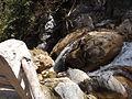 Rishikesh harikempty fallsdwar (367).JPG