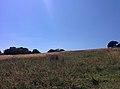Rock-cornwall-england-tobefree-20150715-152411.jpg