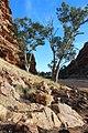 Rock formation at the Gap, Alice Springs IMG 2540 02.jpg