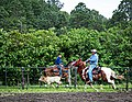 Rodeo Event Calf Roping 12.jpg
