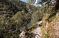 Rogue River & Rainie Falls Trail (34837505522).jpg