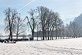Rosegg Allee südlich von Schloss Rosegg 31122010 7251.jpg