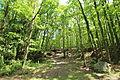 Route du Tilleul à Raizeux le 17 mai 2015 - 09.jpg