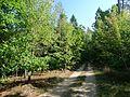 Rumšiškių miškas.JPG