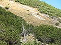 Rupicapra rupicapra Litnisschrofen.JPG