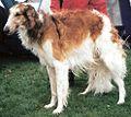 Russian Wolfhound aka Russkaya Borzaya.jpg