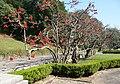 São Paulo, botánico 1.jpg