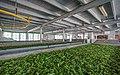 SL NuwaraEDistrict asv2020-01 img03 Damro tea factory.jpg