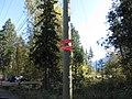 Salmon run at Adams River 2010 (5074065145).jpg