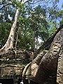 Sangkat Nokor Thum, Krong Siem Reap, Cambodia - panoramio (50).jpg