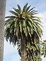 Santa Clara University - panoramio.jpg