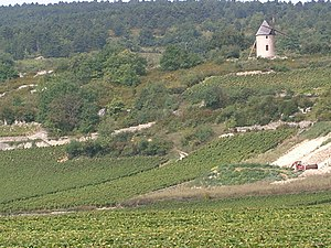 Santenay wine - Vineyards in Santenay. Also visible in the image is the Sorine mill.