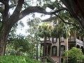 Savannah Estados Unidos5221.JPG