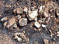 Scattered Brickbats at Grandhasiri Buddhist site 01.JPG