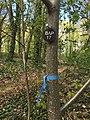 Schwachbaum als Bestattungsbaum im Friedwald (2016).jpg