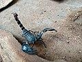 Scorpion (17).jpg