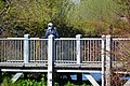 Seattle - Man on bridge at Meadowbrook Pond during the COVID-19 outbreak.jpg
