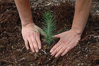 Zalesňovanie