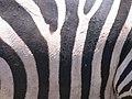 Serengeti National Park-108495.jpg