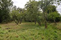 Sergeants Orchard old orchard 1.jpg