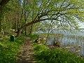 Serock, Jadwisin, cesta kolem jezera II.JPG