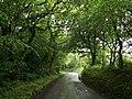 Shaded lane - geograph.org.uk - 468678.jpg