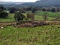 Sheepfold in the Glenkens - geograph.org.uk - 267152.jpg