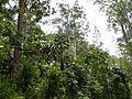Sherwood Forest - panoramio.jpg