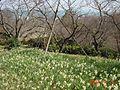 Shiranoe botanical gardens.JPG