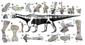 Shringasaurus - Restoration with various fossil bones