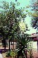 Sicile Vulcano Jardin - panoramio.jpg