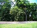 Smolotely, zámecká zahrada, od obchodu.jpg