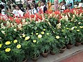 Snap from Lalbagh Flower Show Aug 2013 7865.JPG