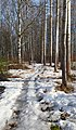 Snow covered path.jpg