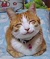 So happy smiling cat.jpg