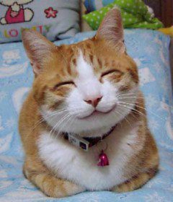 File:So happy smiling cat.jpg - Wikimedia Commons