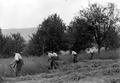 Soldaten beim Mähen des Heugrases - CH-BAR - 3238640.tif