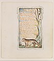 Songs of Innocence and of Experience- The Tyger MET DT992.jpg