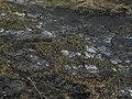 Soos - panoramio (63).jpg