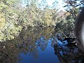 Sopchoppy River FL north01.jpg