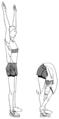 Souplesse exercice de tronc-flexion avant.png