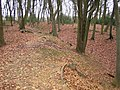 South Heath, Redding Wick Moat - geograph.org.uk - 110245.jpg