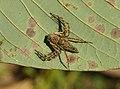 Spider8069.jpg