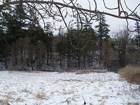 Spring Snow Cover.JPG