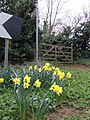 Spring flowers by the bridleway sign - geograph.org.uk - 490233.jpg