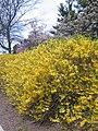 Spring in Princeton 01.JPG