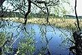 Spynie Loch - geograph.org.uk - 375913.jpg