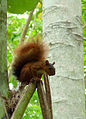Squirrel (7958454816).jpg