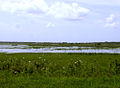 St Johns River Middle Basin.JPG